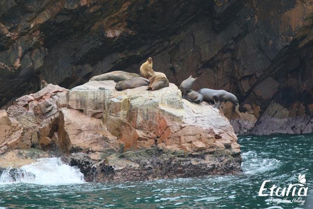 Insulele Ballestas Peru img 1