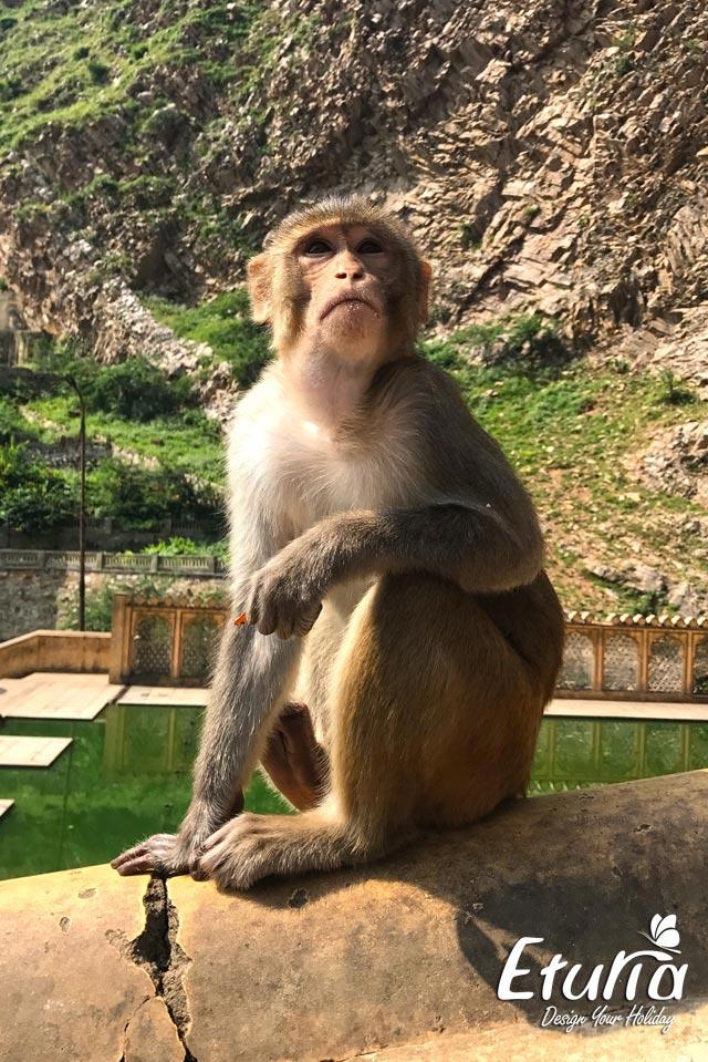 India Agra Templul Maimutelor