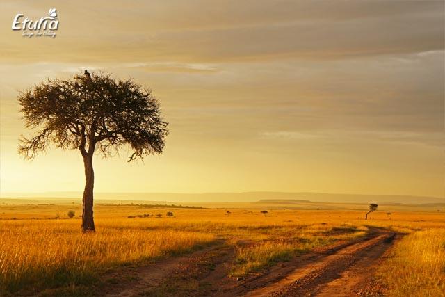 Apus de soare in Safari Maasai Mara