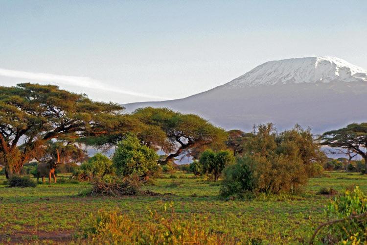 Sfaturi de calatorie pentru un safari in Africa