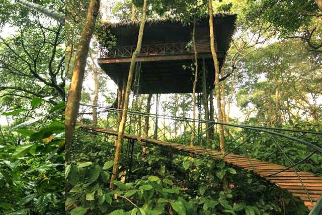 Casute in copac Pepper Trail Wayanad, Kerala