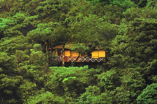 Casute in copac Vythiri Wayanad, Kerala