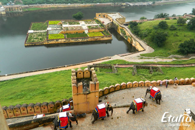 Fortul Amber India