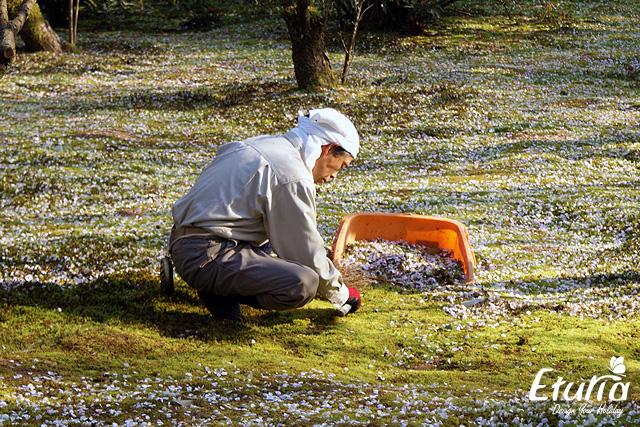 Japonia - curatenie