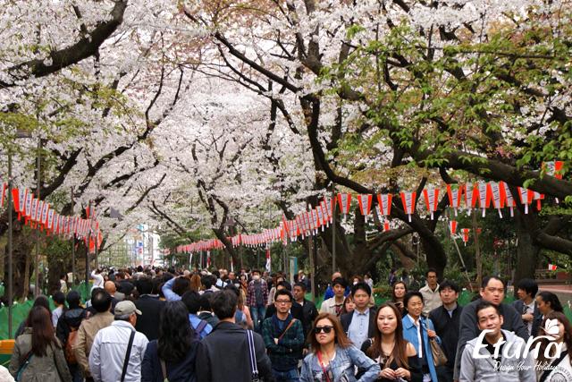 Reguli Fluxul de turisti Japonia