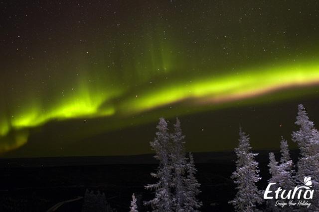 Aurora Boreala Alaska