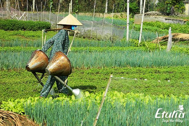 Agricultor vietnamez
