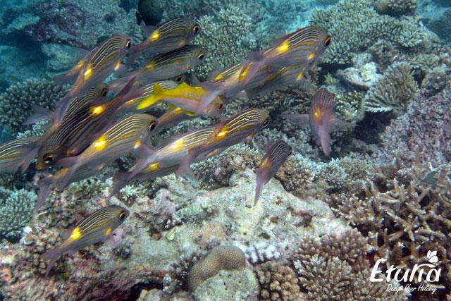 Maldive Snorkeling
