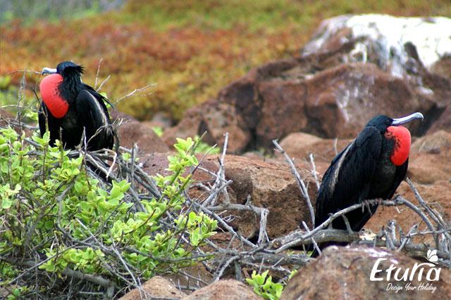 Albatrosi Galapagos