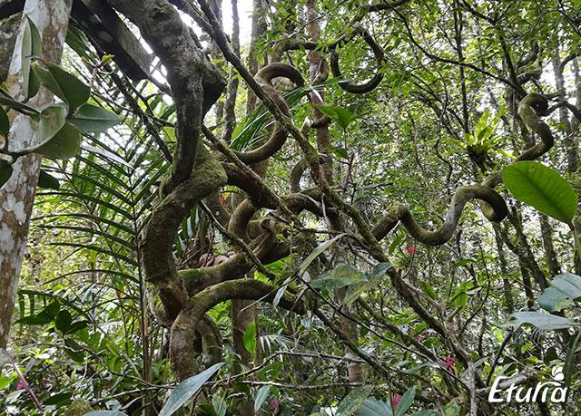 Natura Borneo