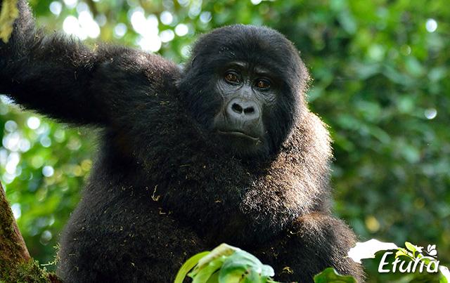 Expeditie in Rwanda si Uganda