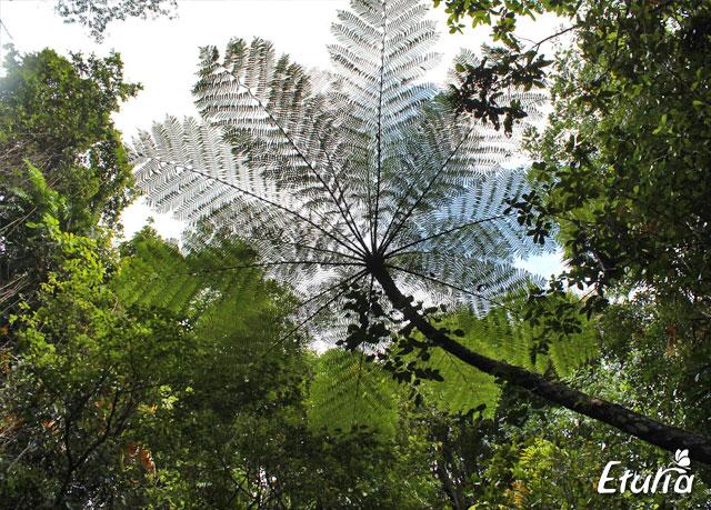 australia natura