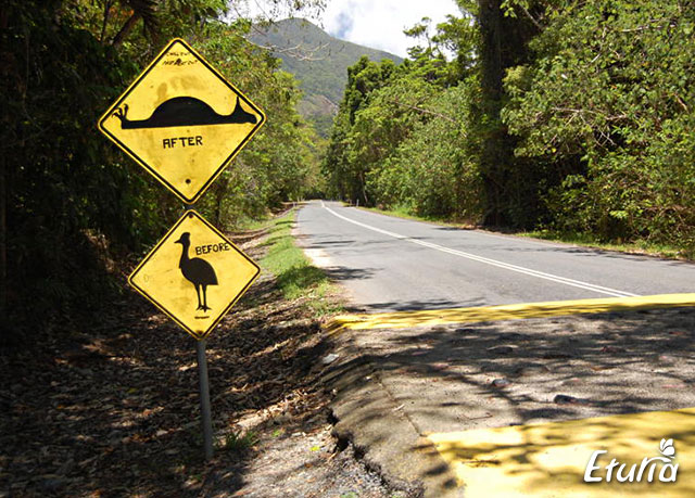 australia drum salbaticie