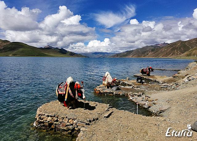 Lacul Yamdrok 2