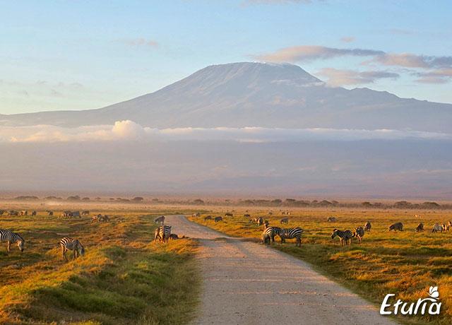 Muntele Kilimanjaro Parcul National Amboseli