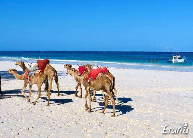camile pe plaja Diani Beach