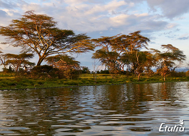 Plimbare cu barca Lacul Naivasha