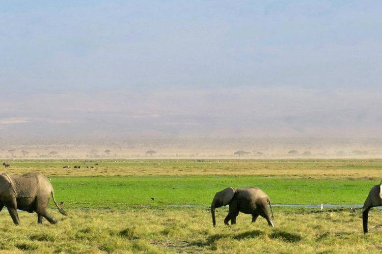 Top 5 rezervatii naturale pentru un safari de vis
