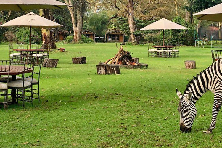 Banner - Unde stam in Kenya?
