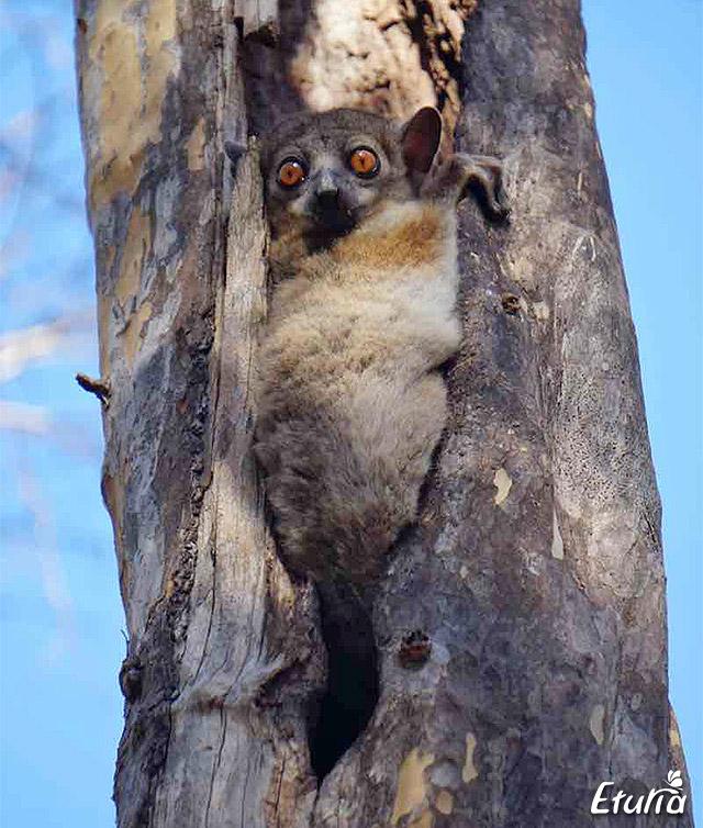 In Parcul National Kirindy, nu stii niciodata cu cine te intalnesti