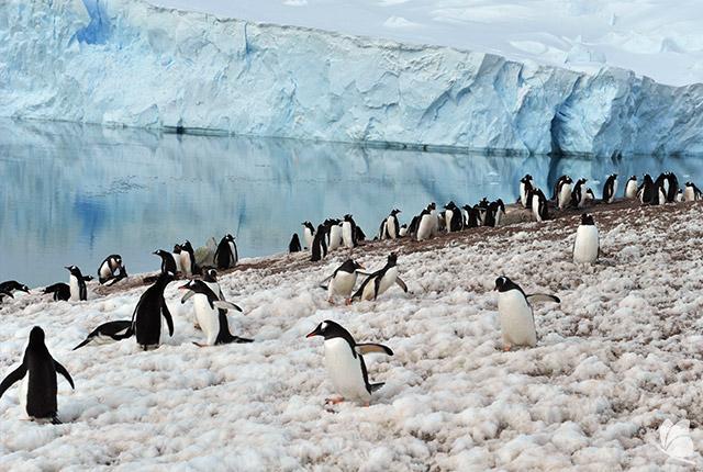 Pinguini in Antarctica