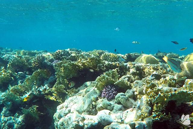 Reciful de corali din Eilat