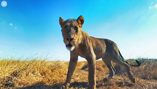 Mai mult decat safari in Africa Australa