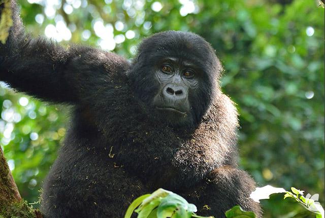 Aventura in Uganda