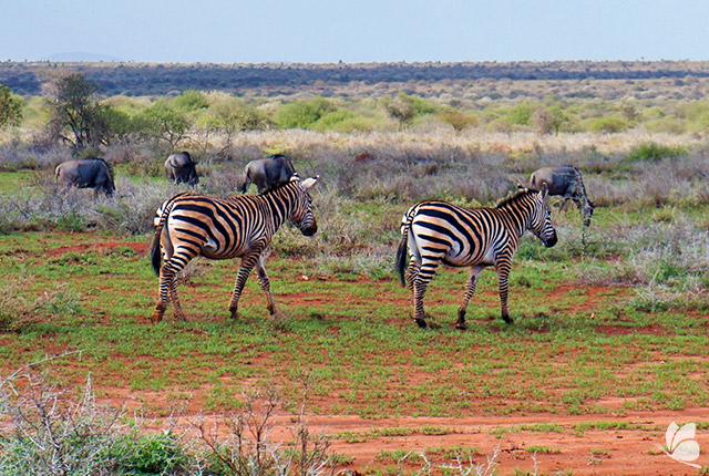 Parcul National Amboseli