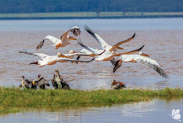 Parcul National Lacul Nakuru