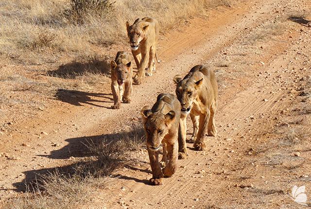 Parcul National Samburu