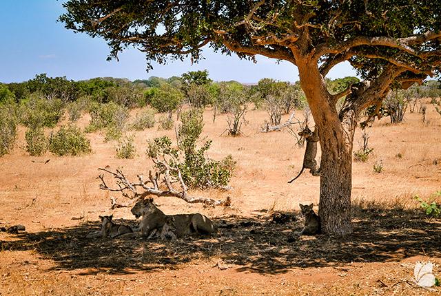 Parcul National Tsavo
