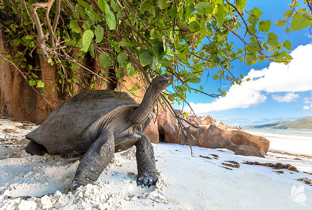 Testoasa Aldabra