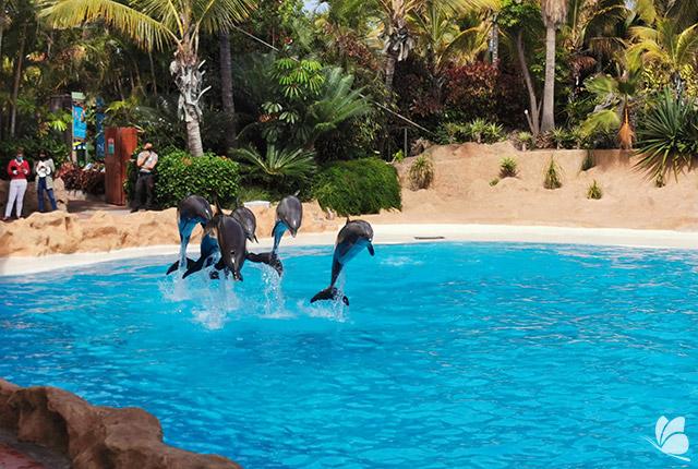 Delfinariul de la Loro Parque